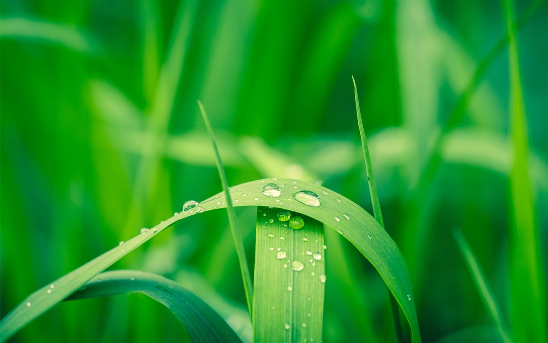 The Healing Power Of Rain